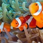 Aquarium Lighting Information